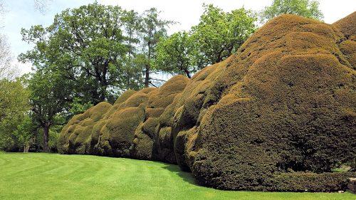 Doddington Place Gardens - one of the many wonderful yew hedges