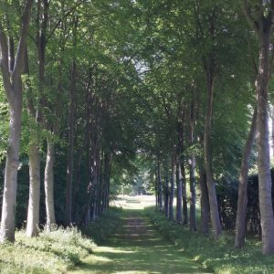 20150703 Bramham Park - one of the tree lined walks