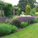 20150705 Littlethorpe Manor border with perfect yew balls