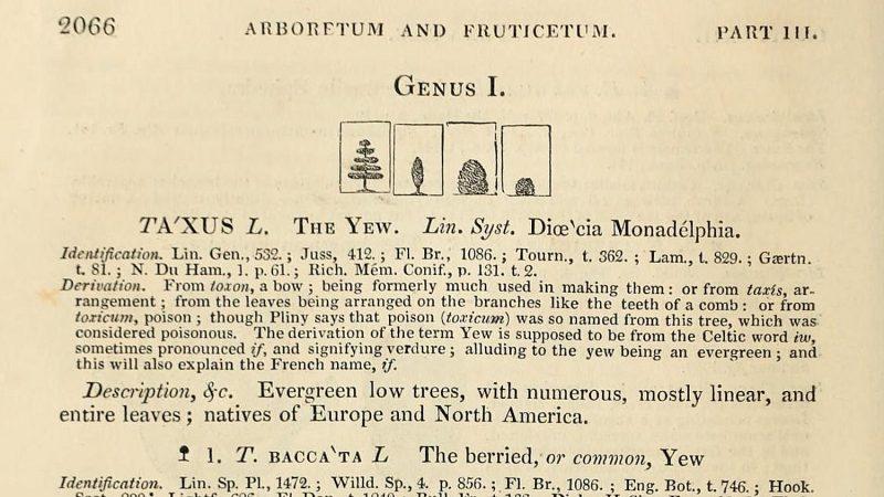 Arboretum et Fruticetum Britannicum page 2066 Vol IV-HL