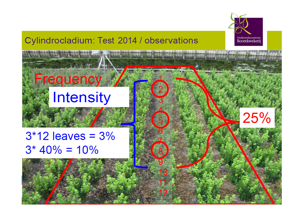 2014 Topbuxus DLV Results 5