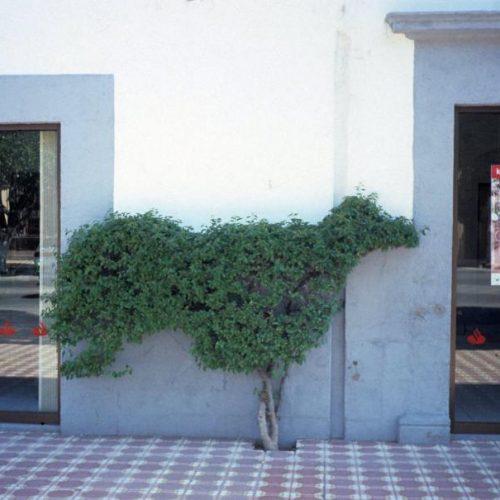 Mexico sculpture - 4