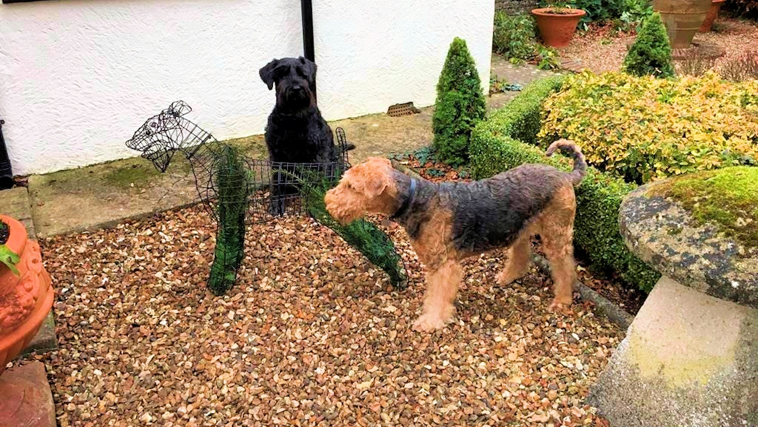 The Airedale Project 07 HL
