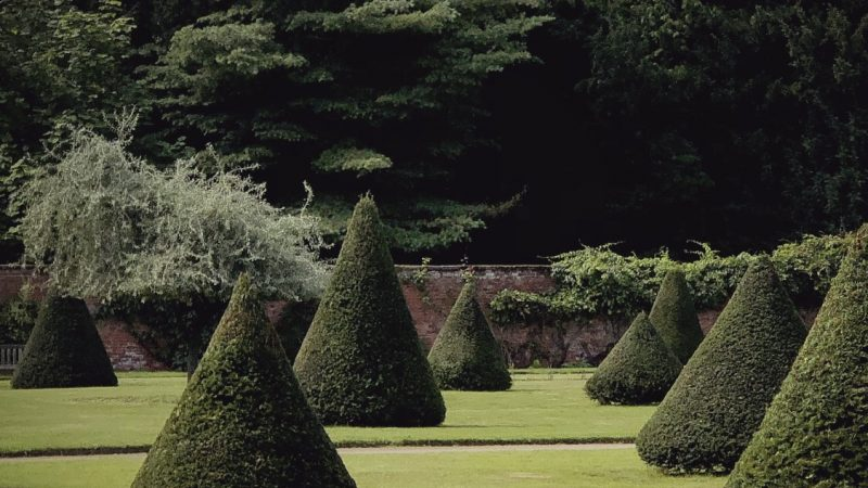 Cone topiaries in the Large Walled Garden