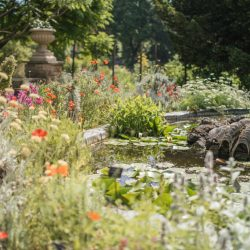 Chelsea Physic Garden - Photo by Laura Stoner-New