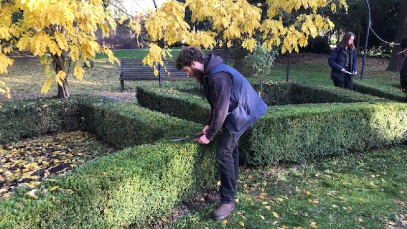 Topiary 8