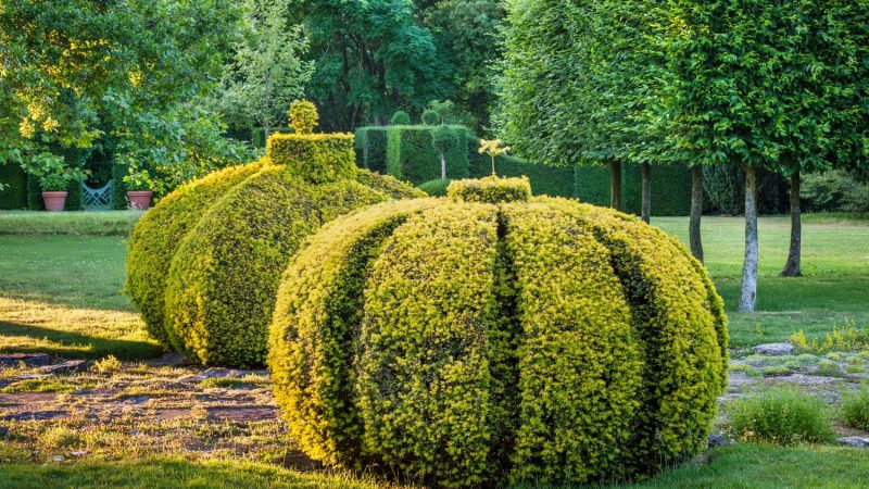 Highgrove Topiary (2)