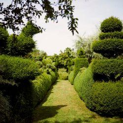Hedges & Shapes