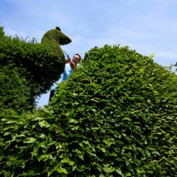 Clipping In The Garden Of Charlotte Molesworth