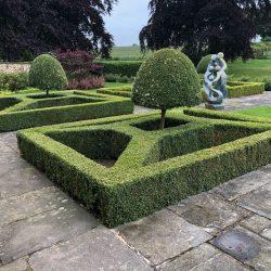 Box & Lonicera topiary