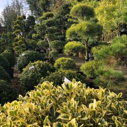 Cloud Trees at Paramount Plants & Gardens