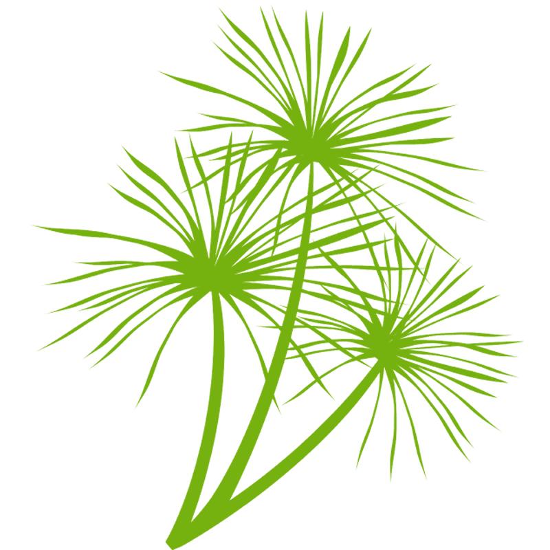 palm-logo-youtube-800-800.jpg