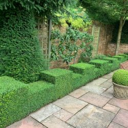 Castellated box hedges