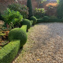 Curving box hedges interspersed with balls