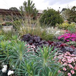 Nicholsons Plant offering