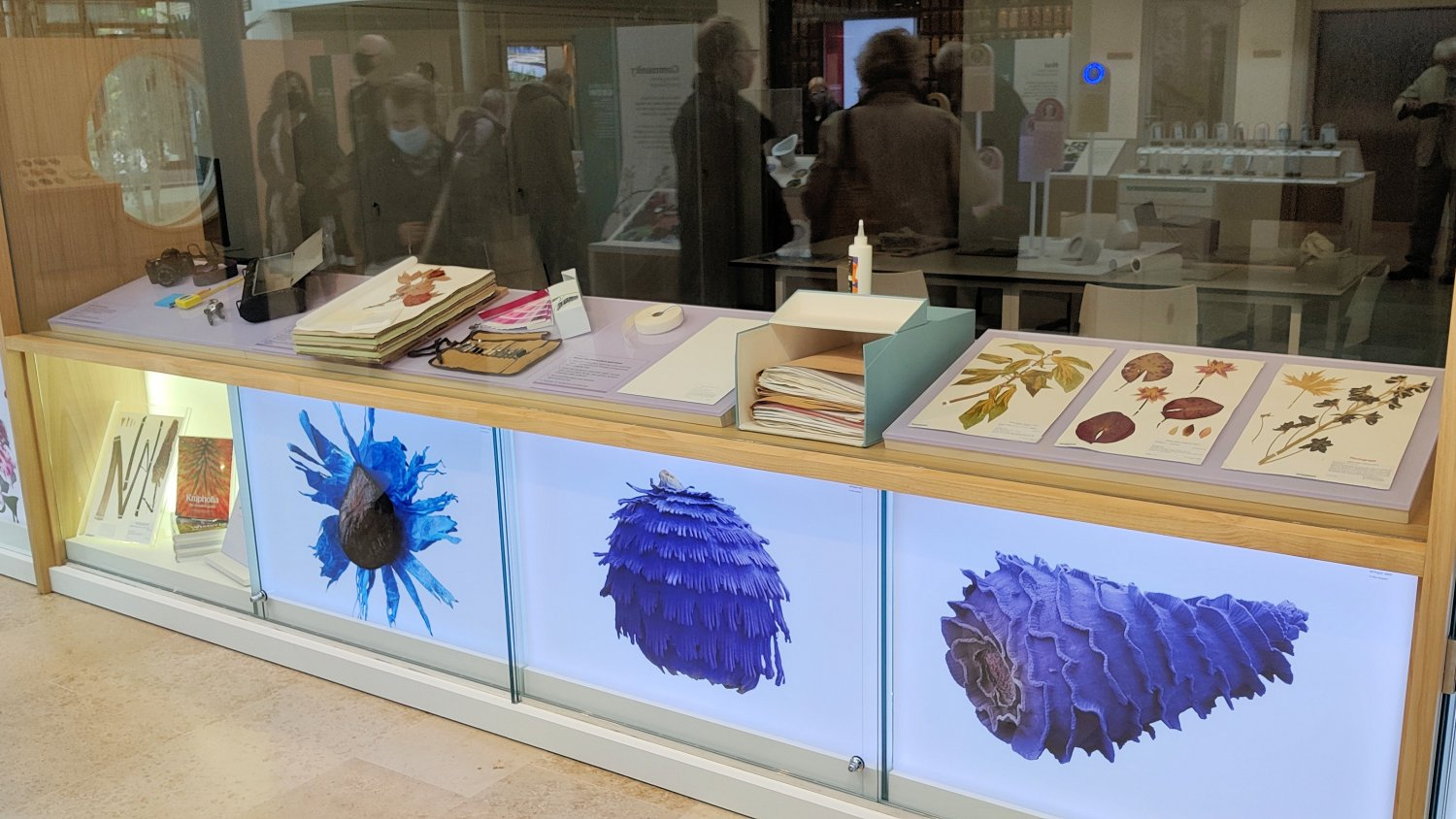 View into the herbarium with examples on display