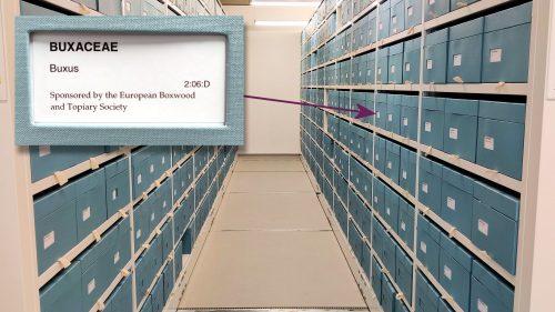 RHS Herbarium EBTS Buxus Boxes HL