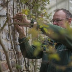 Nicholsons Garden Maintenance Team 2